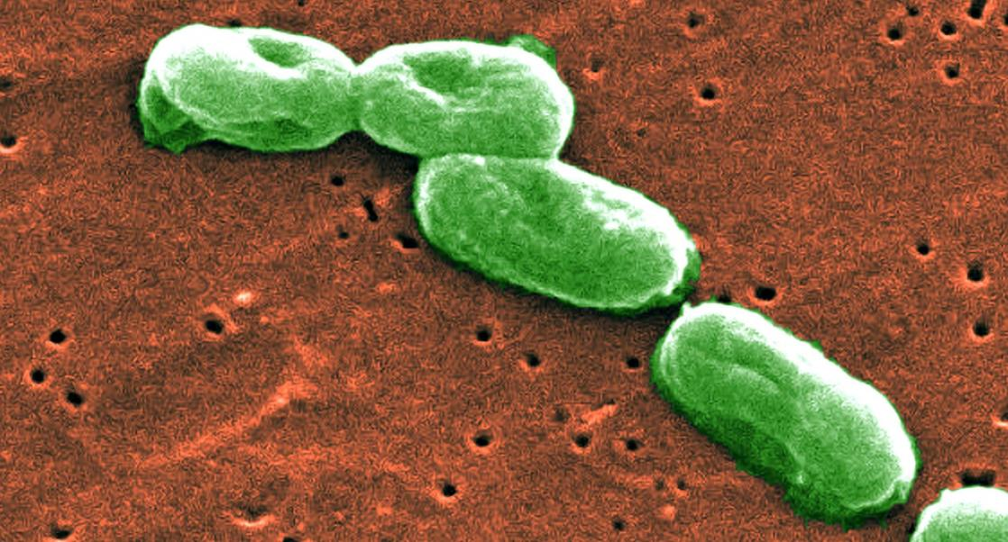 A Scary Microbial Complex is on the Move
