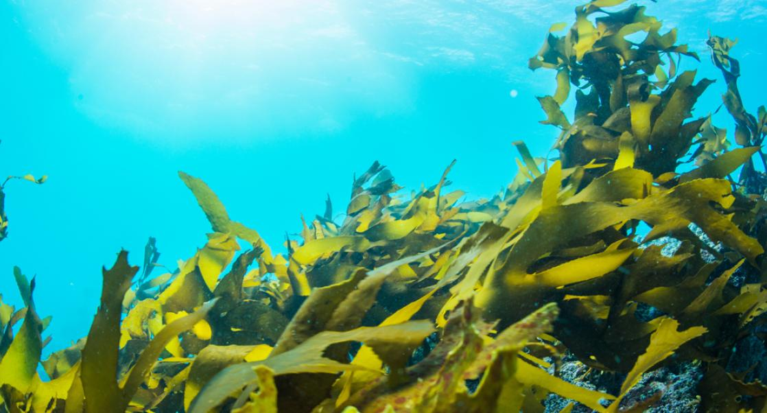 Can Seaweed Treat Alzheimer's? (Abstract Science, Nov. 3 - 9)