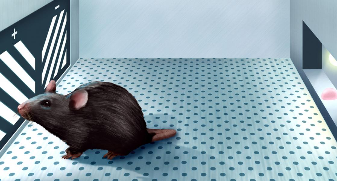 Translating Cognitive Decline in Mice