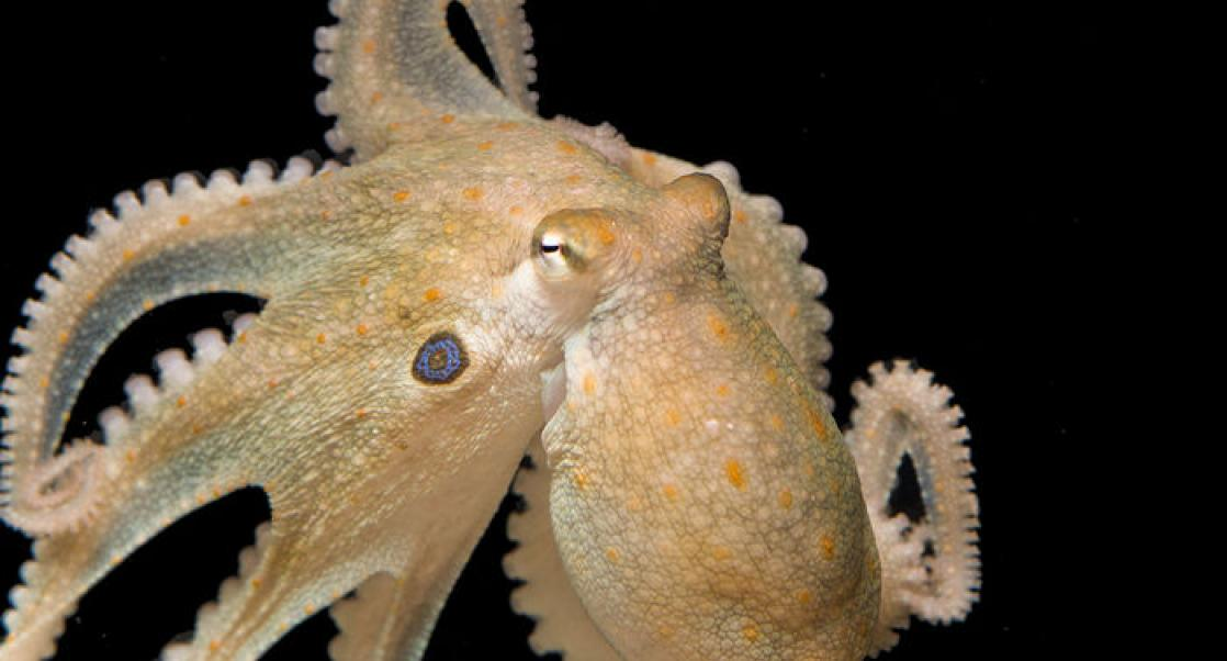 An Octopus Party, Rebuilding the GI System (Abstract Science: Sept. 17-21)