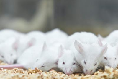 Between 3Rs: Refining the Housing Experience for Lab Mice