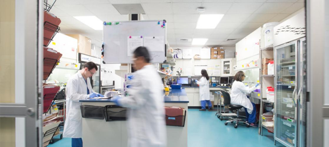 Scientists at work in lab